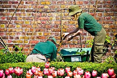 Complete Garden Maintenance