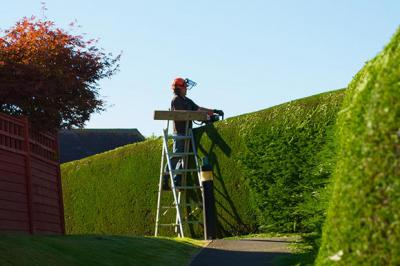 Hedge Cutting & Pruning