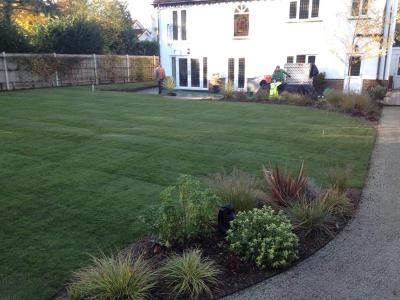 Surrey,Purley-soil improvement & turfing