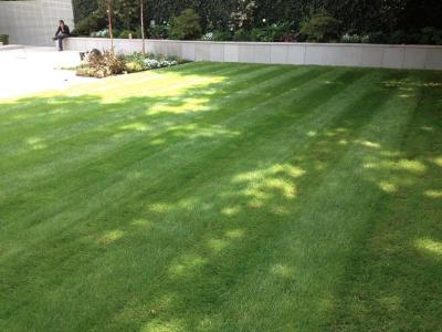 London,Hampstead-lawn maintenance