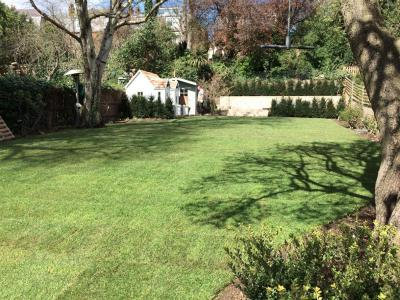 London,Hampstead-soil improvement & turfing