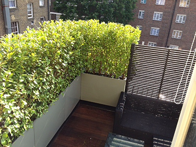 London, Pimlico - roof terrace