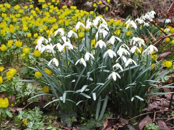 Gardening in February